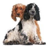 harrogate mobile dog grooming